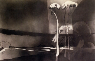 Nicole Chaffey: Three Tree Creek 2013. Graphite on paper
